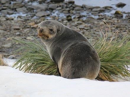 最稀有的鳍脚动物_度哥世界之最