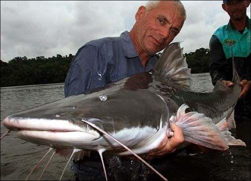 世界上最大的淡水鱼_度哥世界之最