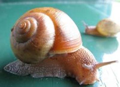 世界最多的动物魔法_度哥蜗牛之最;创造与蜥蜴血牙齿哪有图片