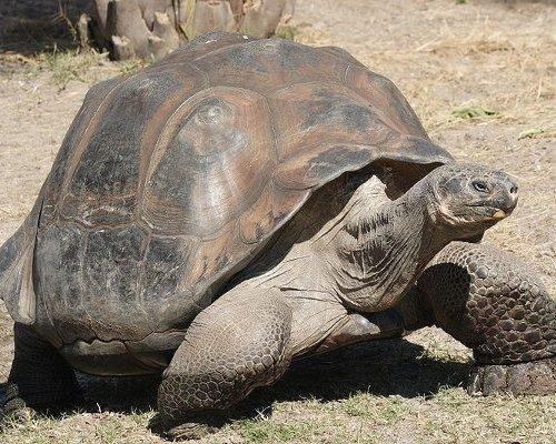 世界之最十大寿命最长的动物