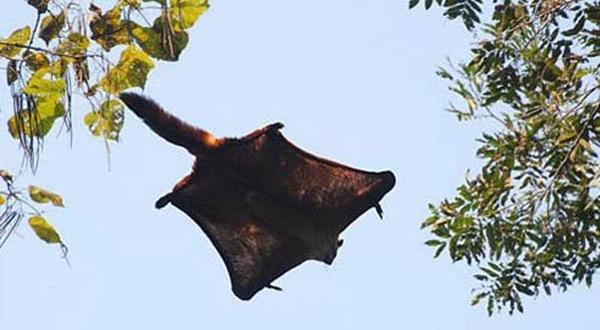 最会飞翔的兽类-哪些动物没有翅膀也会飞