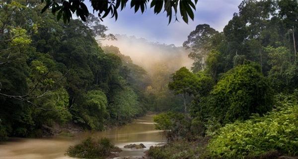 亚马逊河流域 世界最大的热带雨林区