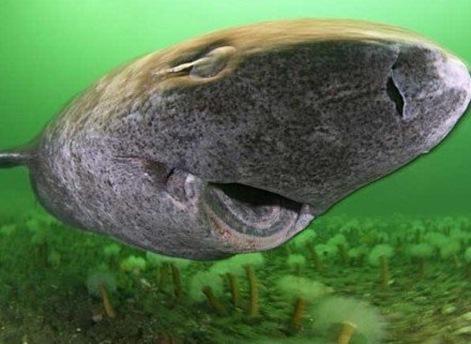 尼斯湖水怪之謎-尼斯湖水怪真相–十大未解之謎