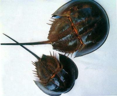 最古老的甲壳动物_度哥世界之最
