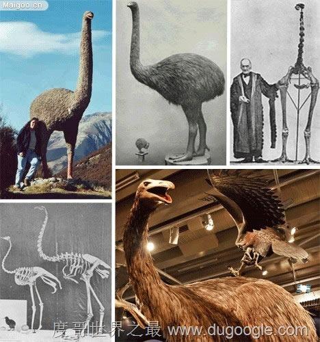 远古巨兽大复活 已灭绝动物14种远古巨兽大复活