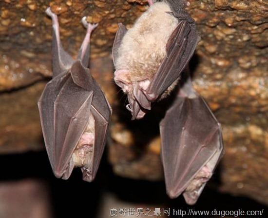 冬眠的动物有哪些?盘点世界上15种冬眠的动物(4)