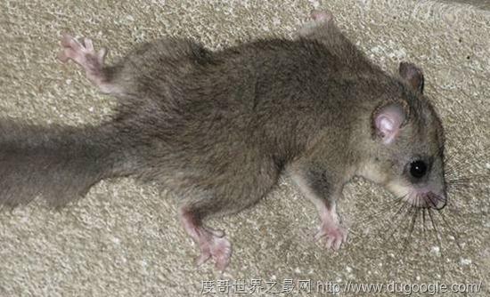 盘点世界上15种冬眠的动物(5)