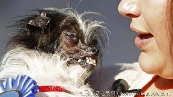 世界最丑狗狗比赛中世界上10种最丑的狗