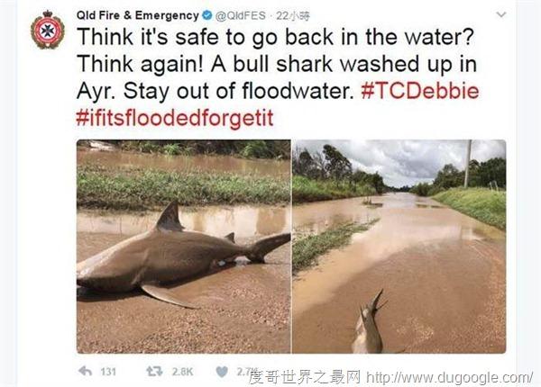 飓风黛比重创澳北 洪水退去留下一条风飞鲨