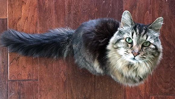 26岁在世最长寿的猫 相当于人类116岁