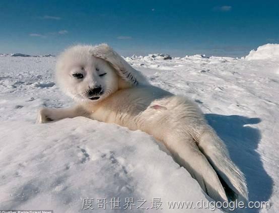 十大动物杀手 自然界最隐蔽的动物杀手排行榜!