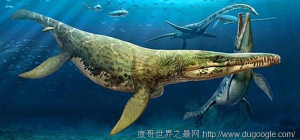 是种海生爬行动物,属于蛇颈龙目的上龙亚目,上龙类的明显特征是短而