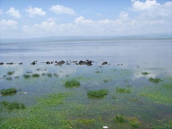 湖泊呈长椭圆形,长11.9公里,最大宽5.8公里,面积47.2平方公里.