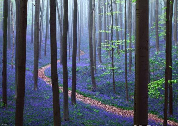 世界上18座最让人向往的神秘森林