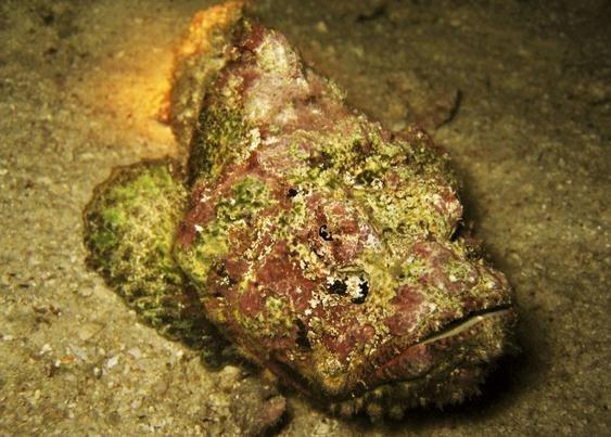 世界十大最毒的动物_度哥世界之最