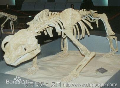 始熊猫, 以食肉为主的最早的熊猫