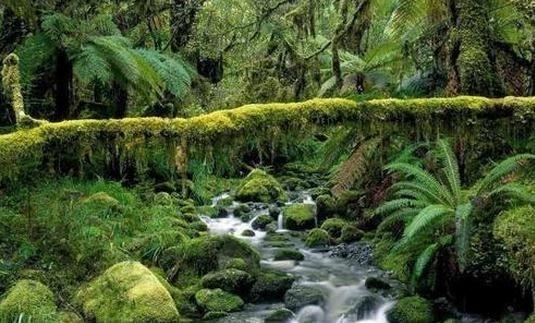 世界最大的热带雨林 亚马逊热带雨林