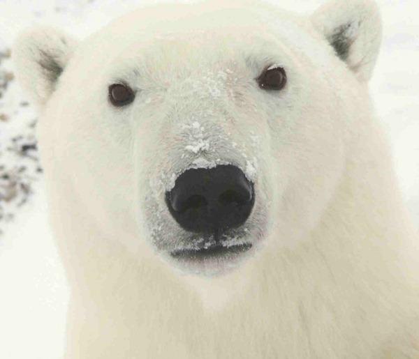 世界十大最危险的动物杀手