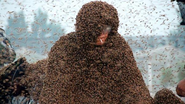 百最好万只蛰身:高丙国打破吉尼斯世界纪录蜜蜂的仓鼠品种排名图片