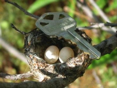 鳥類中的最大的鳥蛋是鴕鳥蛋嗎?