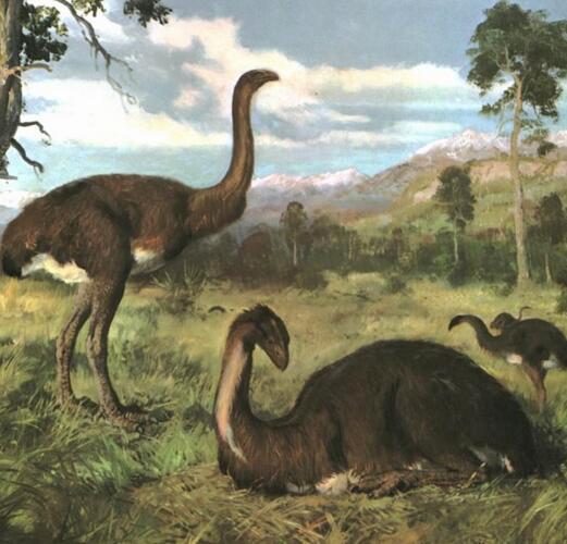 世界第一高鸟,巨型恐鸟高达3.6米却不会飞