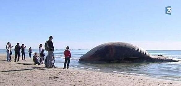揭秘鲸鱼爆炸的真相,竟因体内气体所导致 极度危险 2