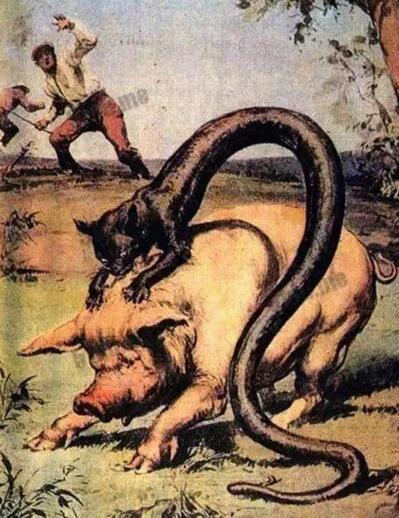 塔佐蠕虫披着鱼鳞的猫,散发有毒臭气(置人于死地)
