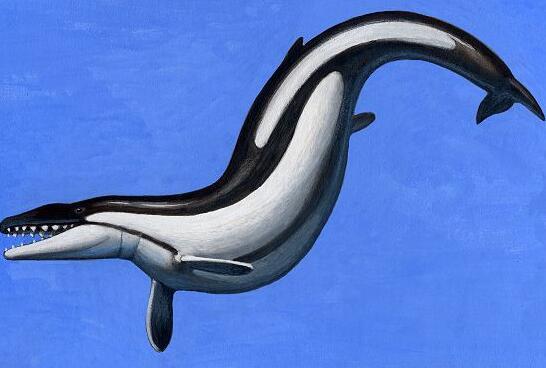 之一.目前科学研究发现它的天敌可能是鲨鱼类的鼠白鲨.