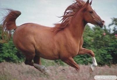 最贵的马1600万美元 世界上10大最昂贵动物盘点